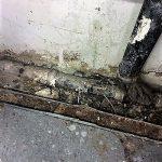 Mold Damage On floor